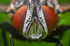 erazero-fly1