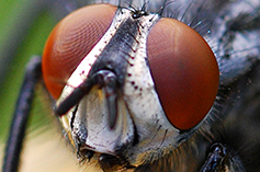 erazero-fly11