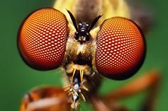 erazero-fly3